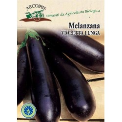Purple long eggplant
