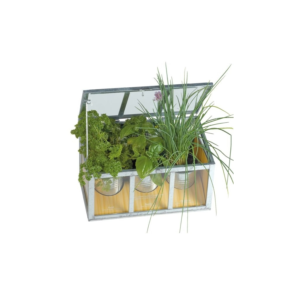 Serra con piante aromatiche