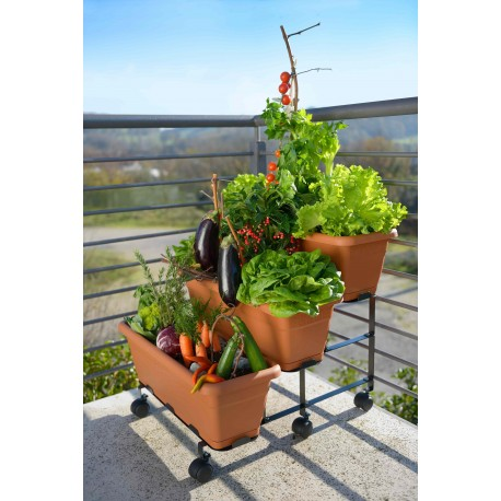 Stair cased garden with pots - Orto sul Terrazzo