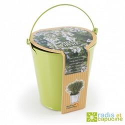 Organic parsley in zinc pot